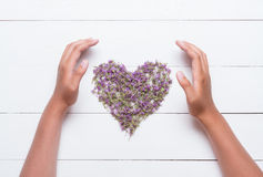 Heart made of thymes with young hands around it on white wooden Royalty Free Stock Photo