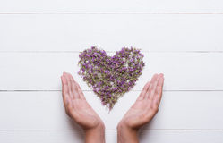 Heart made of thymes with young hands holding it on white wooden Royalty Free Stock Photos
