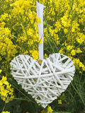 Heart made of wicker hanging in a rapeseed field. A white wicker heart hanging in a rapeseed field Royalty Free Stock Photos