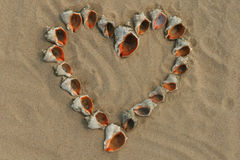 Heart maked of shells. Stock Photography