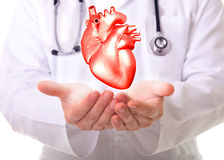 Heart. Male doctor showing a red heart royalty free stock image