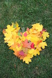 Heart from maple leaves Stock Image