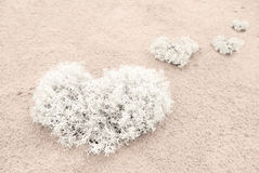 Heart from moss on the sand Stock Images