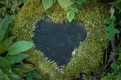 Heart of moss on a stub Stock Photos