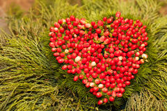 Heart of the mountain ash Royalty Free Stock Photography