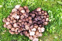 Heart of mushrooms Royalty Free Stock Photos