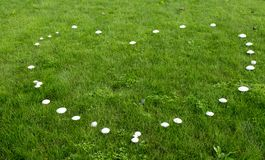 Heart of mushrooms. Mushrooms in the lawn which take the form of a heart Stock Image