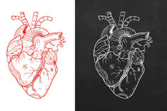 Heart, natural heart, sketch heart. Concept of trendy  heart  in two defferent styles Stock Photography