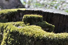 Heart in an old tree. royalty free stock photography