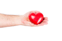 Heart on the palm. Heart in hand as love and health symbol over white Royalty Free Stock Images
