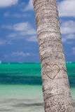 Heart on the palm. Tree, bavaro beach Royalty Free Stock Image