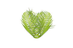 Heart of palm leaves isolated on white background - environmenta. Heart of palm leaves - environmental concept Stock Photos