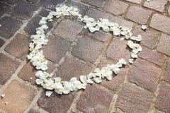petals in love-heart Stock Image