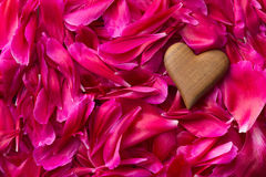 Heart on peony petals background. Stock Images