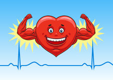 Heart in perfect condition. Royalty Free Stock Image
