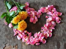 Heart from petals Stock Photo