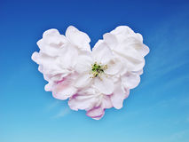 Heart from petals. White heart from petals on a background blue sky Royalty Free Stock Photo