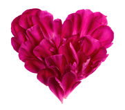 Heart from the petals of a flower Royalty Free Stock Images