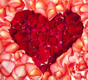 Heart from petals of a red rose Royalty Free Stock Images