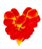 Heart from petals of red tulips. Heart from petals of red and yellow tulips Royalty Free Stock Images