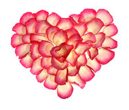 Heart from the petals of rose. On the white background, to the day of Sainted Valentine Stock Photos