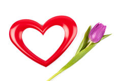 Heart photoframe and tulip Royalty Free Stock Photo