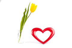 Heart photoframe and tulip. Beautiful heart frame and yellow tulip standing in glass vase, isolated on white stock photos