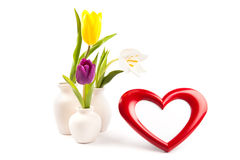 Heart photoframe and tulips. Beautiful heart frame and bouquet of tulips isolated on white royalty free stock image
