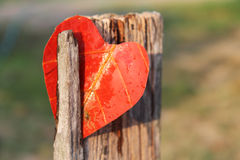 Heart on a pile leaves Royalty Free Stock Photo