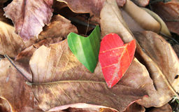 Heart on a pile leaves Stock Photos
