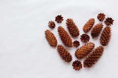 Heart of pine cones and fir cones on white background. Royalty Free Stock Photo