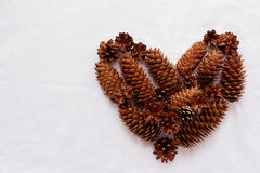 Heart of pine cones and fir cones on white background. Royalty Free Stock Images