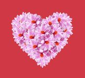 Heart Pink Flowers on Red Background Royalty Free Stock Photo