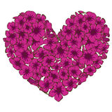 Heart of pink phlox flowers isolated on white background. Vector illustration. Heart of pink phlox flowers isolated on white background. Vector Royalty Free Stock Image