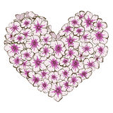 Heart of pink and violet phlox flowers  on white background. Vector illustration. Stock Photography