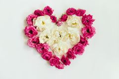 Heart of pink and white roses on white background royalty free stock images