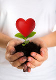 Heart Plant in female hands Stock Images