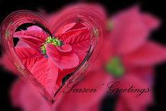 Heart and Poinsettia. Stock Image