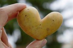 Heart potato Royalty Free Stock Image
