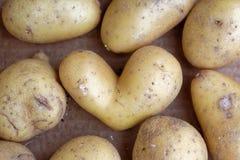 Heart potato between potatoes Stock Image