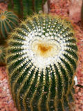 Heart of prickles Royalty Free Stock Images