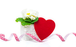Heart, primrose, Valentine's Day Stock Photography