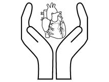 Heart protection. Vector illustration of a human heart between hands Royalty Free Stock Images