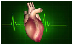 Heart and pulse Stock Photos