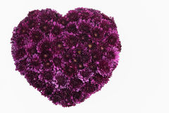 Heart purple. Stock Photos