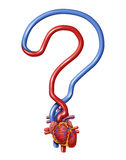 Heart Questions. As human anatomy for pumping blood shaped as a question mark as a symbol of health information and guidance for a healthy body isolated on Royalty Free Stock Photography