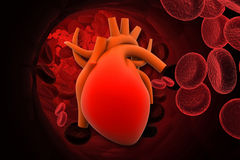 Heart with red cells Stock Image