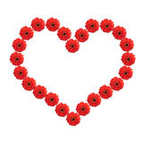 Heart from red gerbera flowers isolated on white Stock Images