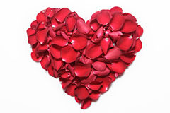 Heart of red rose petals on white background. Valentine's Day, anniversary etc background. Stock Image