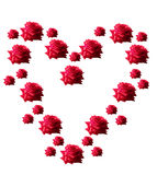 Heart of red roses on a white background. Stock Photo